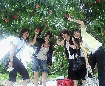 peach picking 2